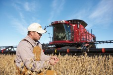 Farmer in front of combine inspecting his soybean crop